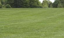 Jak założyć piękny trawnik na glebie bez chwastów ?