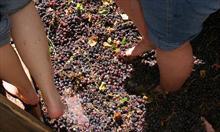 Przeciwwskazania winoterapii
