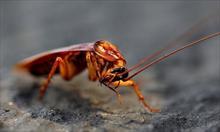 Środowsko dla karalucha