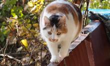 Jak zmienić negatywne zdanie o kotach?