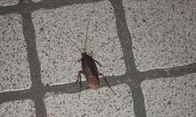 Jak się pozbyć karaluchów, czyli nieproszonych gości w naszym domu