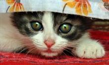 Nasze koty w wesołych sytuacjach