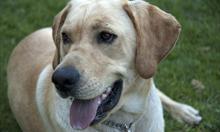 Jak wyczyścić psie uszy?