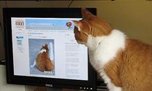 Koty lubią wszystko, co się rusza