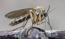 Skuteczne sposoby na pozbycie się komarów