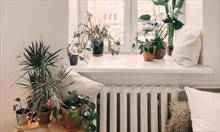 Jak uratować przelane rośliny doniczkowe