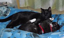 Jak kota przyzwyczaić do obecności nowego towarzysza?