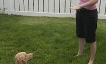 Jak wybrać szkołę szkolenia psów?