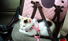 Jak właściwie przygotować psa lub kota do długiej podróży?