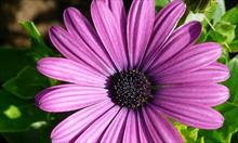 Zapewnienie dłuższej żywotności kwiatów ciętych