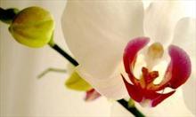 Jak pielęgnować storczyki po przekwitnięciu?