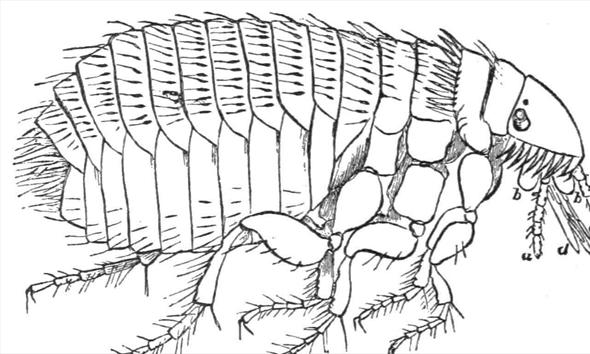 Jak walczyć z pchłami, czyli dom bez pasożytów?