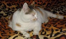 Drugi kot w domu – problem czy może wielka radość?