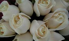 Najpopularniejsze kwiaty na groby