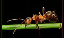 Jak dogadać się z mrówkami?