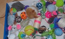Futerkowe, sznurkowe i interaktywne zabawki