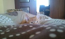 Jak wychować kota na dobrego domownika?