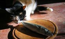Wszystko o zdrowym żywieniu kotów