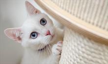 Drapak dla kota jako element wystroju wnętrza