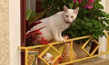 Balkon - idealny azyl dla kotka