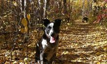 Jak dbać o zdrowie psa jesienią?