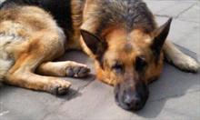Jak zaprzyjaźnić się z psem sąsiada / przyjaciela?