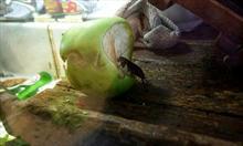 Sprzątanie i dezynfekcja karaluchów