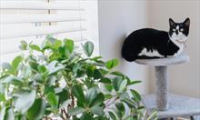 Po czym poznać, że nasz kot mógł zatruć się rośliną?