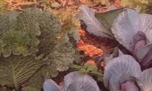 5 sposobów na poprawę żyzności gleby