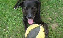 Jak zadbać o szczęście naszego psa ?
