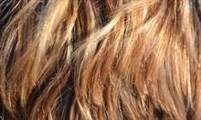 Korzyści z olejowania włosów.