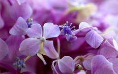 Pielęgnacja roślin domowych
