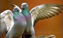 http://www.flickr.com/photos/claudiogennari/3186966529/sizes/m/in/photostream/