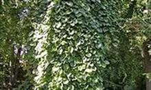 Rośliny odstraszające