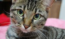 Jak działają kocie zmysły?