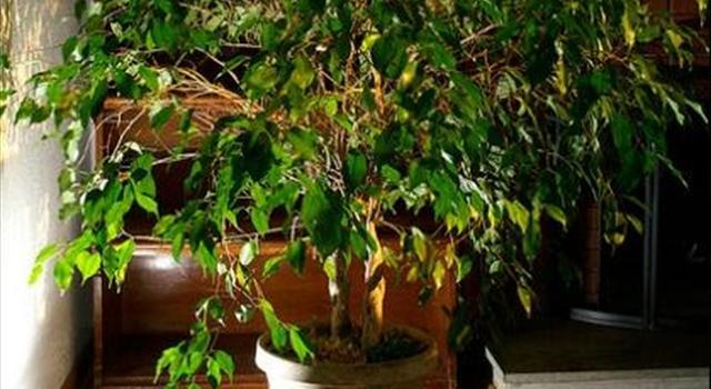 Idealne warunki dla rośliny