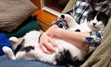 Nauka i cierpliwość dla kotka