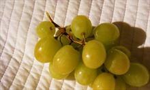 Winoterapia – winogrona i wino razem