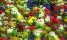 Kwiaty sztuczne, czy żywe