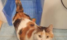 Jak zrobić samemu kuwetę dla kotów?