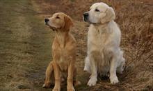 Jak poradzić sobie ze śmiercią pupila, psa lub kota?